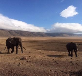 olifanten op de vlakte