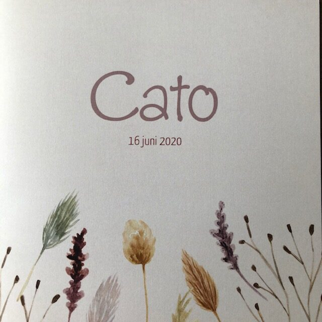 cato-rotated